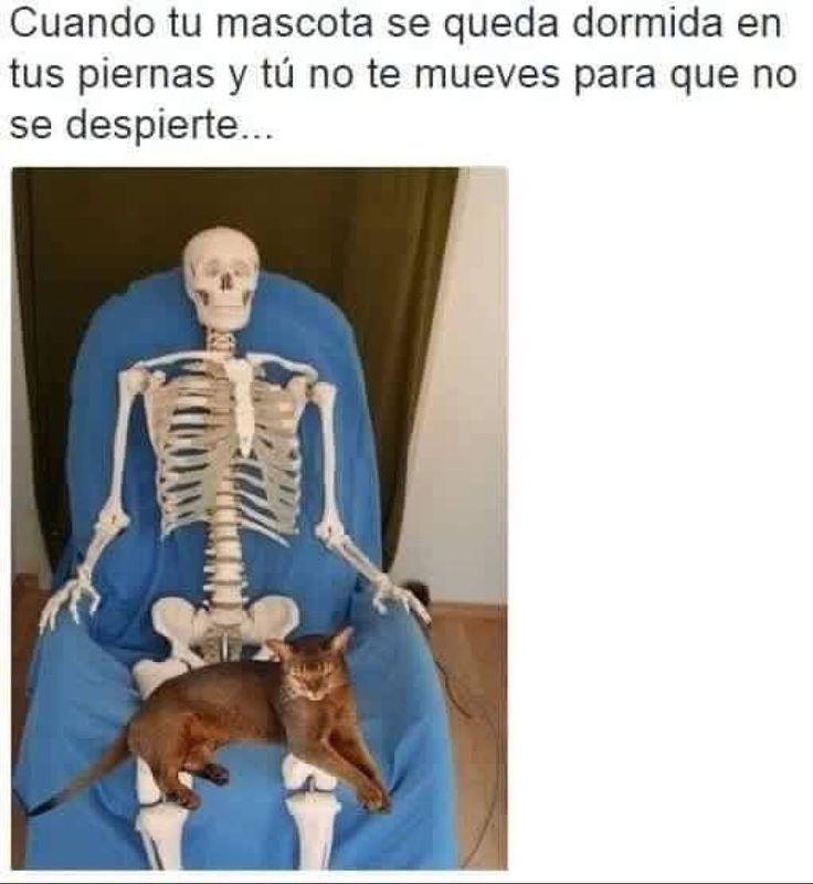 Jajajajajaja!! #memes #chistes #chistesmalos #imagenesgraciosas #humor http://www.megamemeces.com/memeces/imagenes-de-humor-vs-videos-divertidos