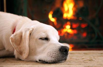 perro durmiendo junto a chimenea