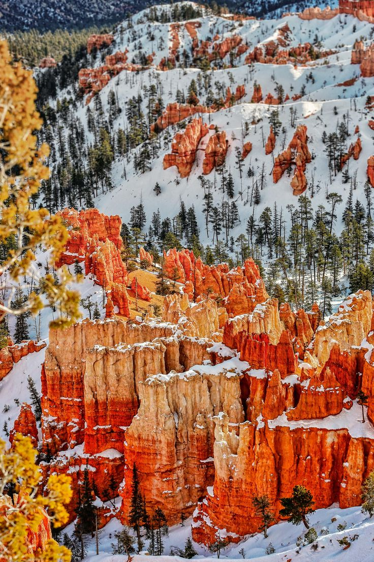 Sunrise at Bryce Canyon in Utah - red rocks gleaming in the early sun, amid all the deep winter snow.