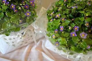 Quel giorno sembrava un giardino segreto ♥ That day seemed a secret garden  Http://gliantichimestieri.blogspot.it