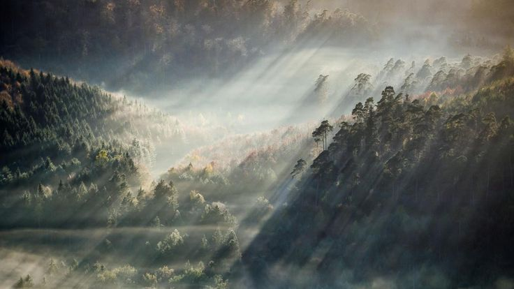 1920x1080-hill_foggy_forest_fog_tree_forest_nature-14616.jpg (1920×1080)