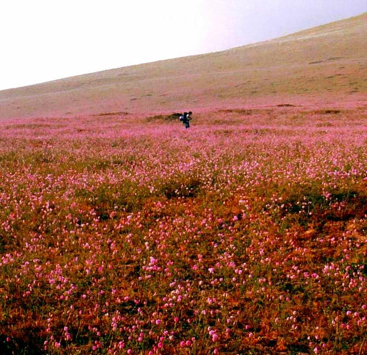 Desierto Florido (:
