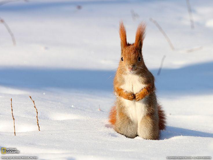 Late Winter Animals Wallpaper