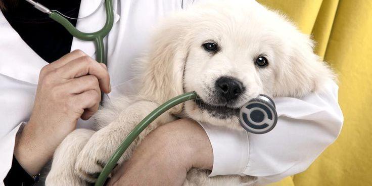 Beteg a kutya? - Hírek  #kutya #dog #sick #goldenretriever#beteg #kutyabaráthelyek