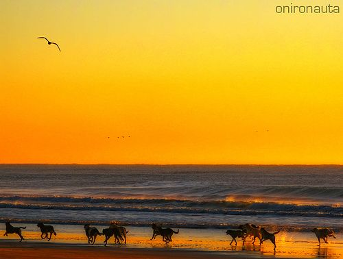 Running+Free+-+Pack+of+Street+Dogs+on+the+beach+Part+2+(IN+EXPLORE)Argentina