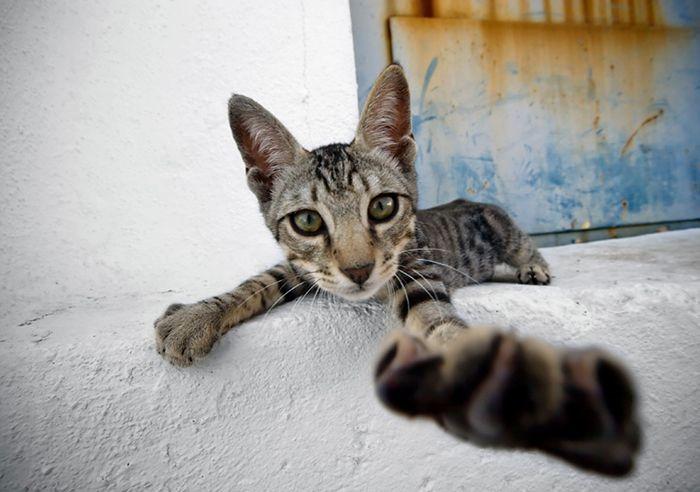 De katten van Istanboel - Nomad & Villager
