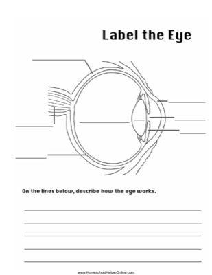 Label the Eye Worksheet school Parts of the eye, Homeschool