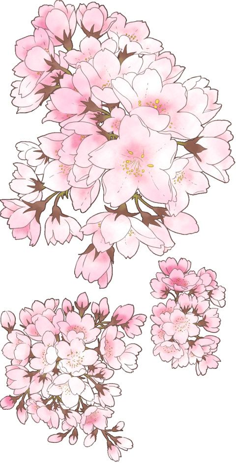 pixiv Spotlight - Cherry Blossom patterns and textures!