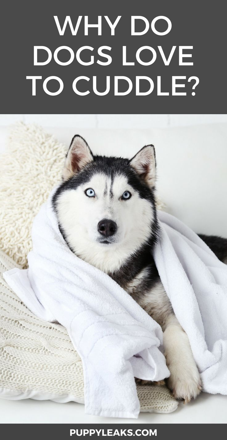 best Pamper Your Pooch Pet images on Pinterest Australian