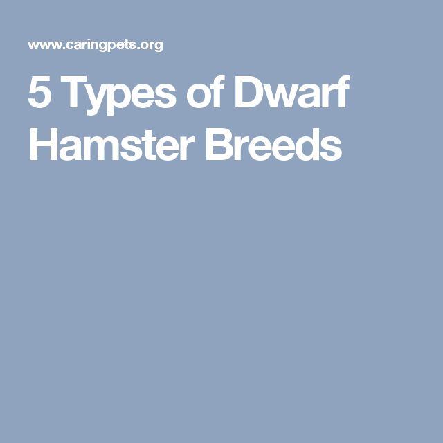 5 Types of Dwarf Hamster Breeds