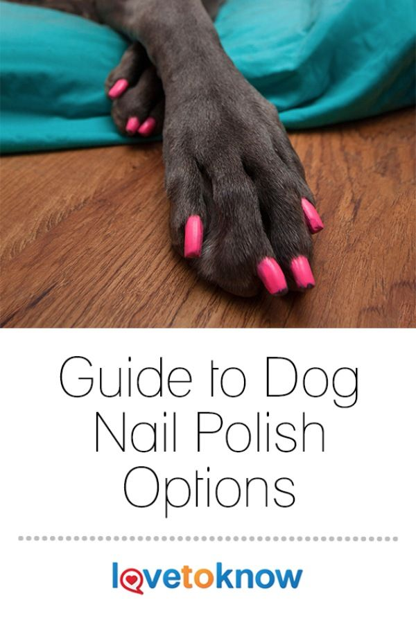 Want to paint your dog's nails at home instead of taking her to a groomer? Don't use the polish you use on your fingers and toes, Dogaholic warns, as human nail polish contains formaldehyde, toluene and dibutyl phthalate, all of which are toxic to dogs. Instead, coat your pouch's nails in nail polish made for especially for him.   Guide to Dog Nail Polish Options from #LoveToKnow