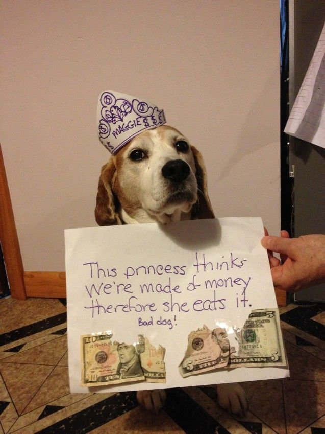 214 Best The Best Of Dog Shaming Images On Pinterest