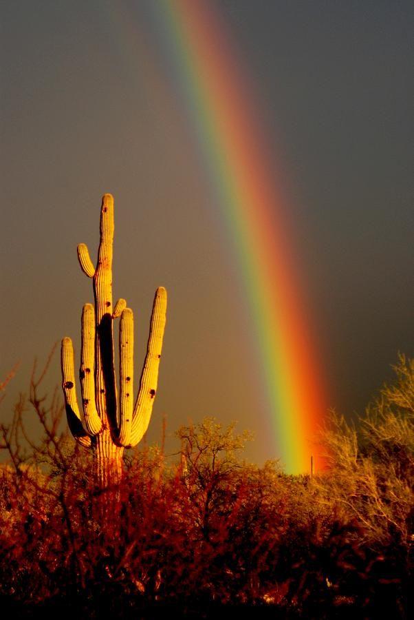 Desert Rainbow Photograph  - Desert Rainbow Fine Art Print