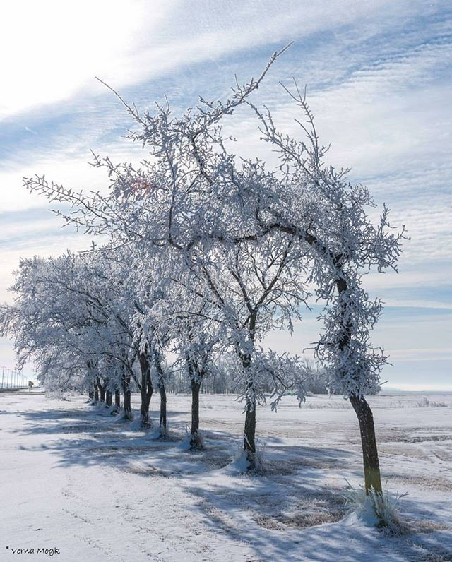 The Hoar frost is so nice out here in #EasternMb. Photo by @verna.mogk near Île-des-Chênes, Manitoba