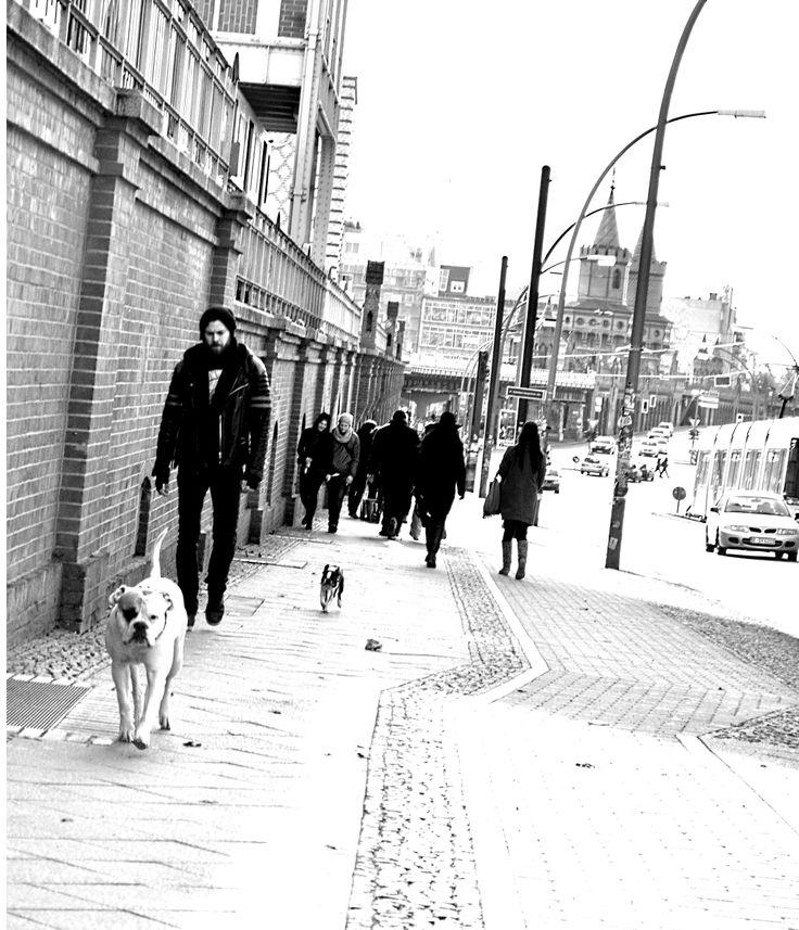 Hunde... photo by Flò