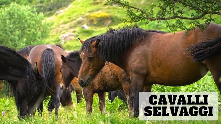 #cavalli #genova #liguria #italy #wild #travelling #horses