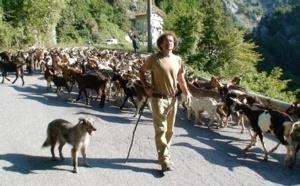 Cani da pastore, patrimonio da salvaguardare