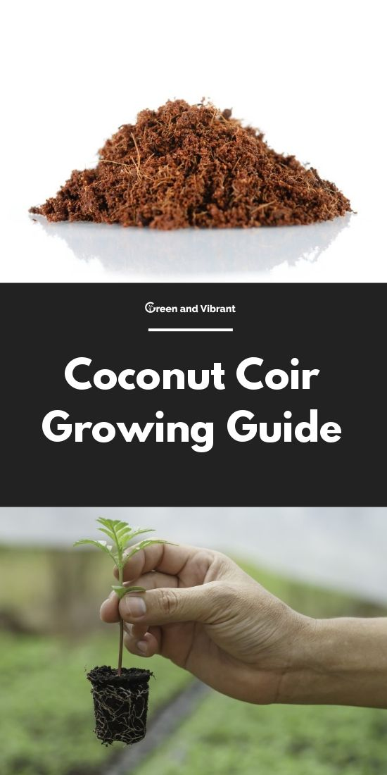592a5410480eda8570518ff7c96a565e - How To Use Coconut Coir In Gardening
