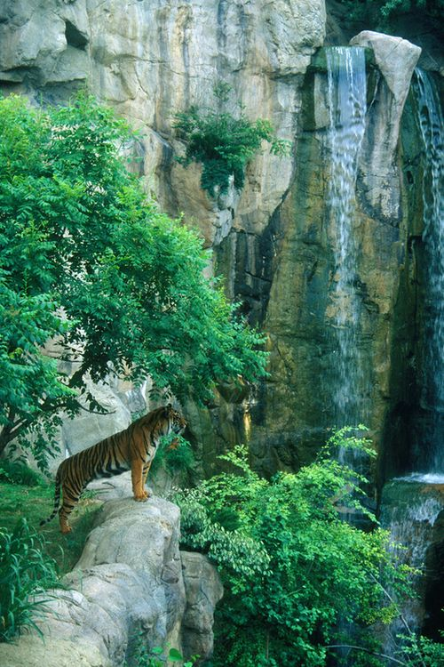 tigers-vibe:  vanillaa-sunshine:  ♡♡ active jungle blog ♡♡   Follow tigers-vibe for more tropical ☮ ☯ ☼