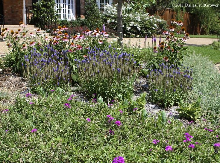 248 best images about xeriscape on pinterest gardens for Best plants for flower beds