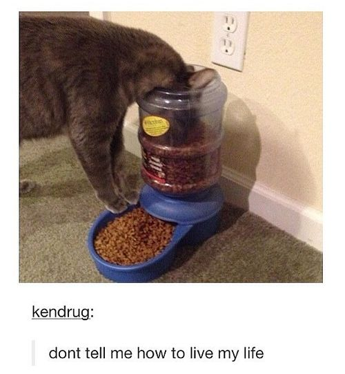 21 Times Tumblr Told The Truth About Cats. Just try to read this without peeing your pants. Just try.