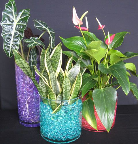 Indoor Plants Grown In Water: 17 Best Images About Plants - Indoor On Pinterest