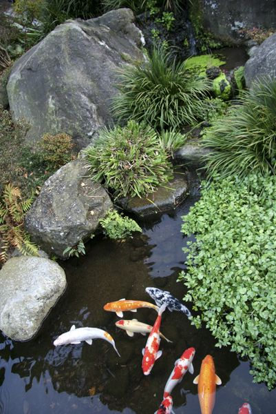 Japanese Carp Pond  Andy needs to make me a huge pond! I would love this in my yard!