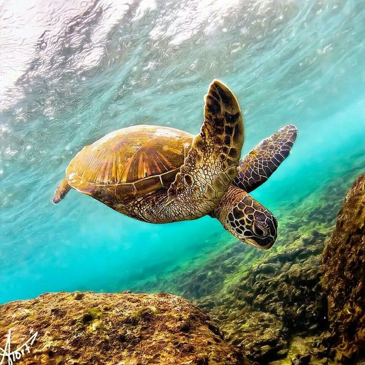 It's almost Turtle Time in Queensland!