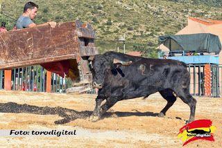 torodigital: Concluyen los festejos taurinos en Els Rosildos