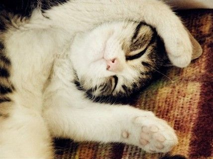 awwwwSleepy Time, Kitty Cat, Favorite Places, Funny Face, Pets Photos, Cat Naps, Cat Cat, Happy Home, Adorable Animal