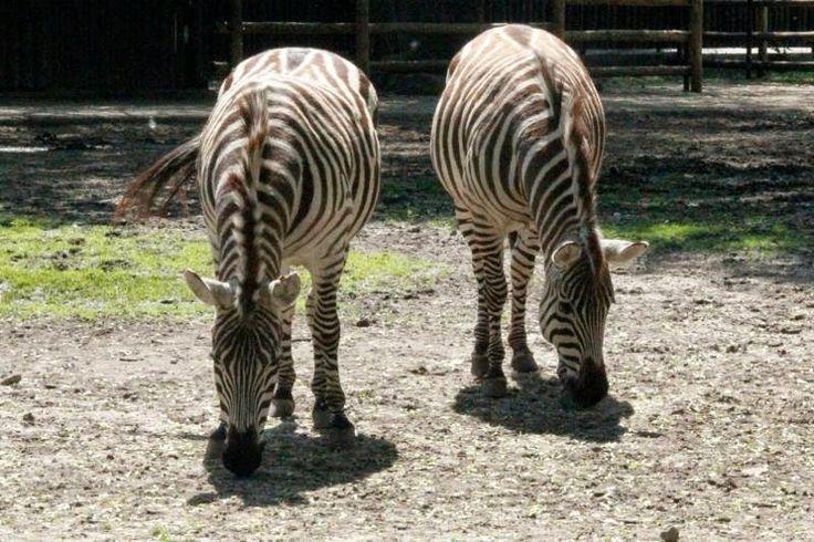 εν πλω σημειώσεις  φωτογραφίας : Ζωολογικός κήπος Βαρσοβίας ,φωτογραφίζει η Δέσποιν...