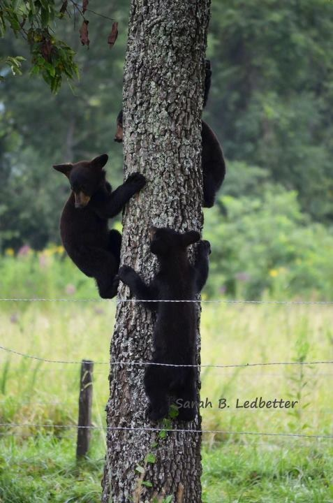 136 Best Cades Cove Tennessee Images On Pinterest Smokey