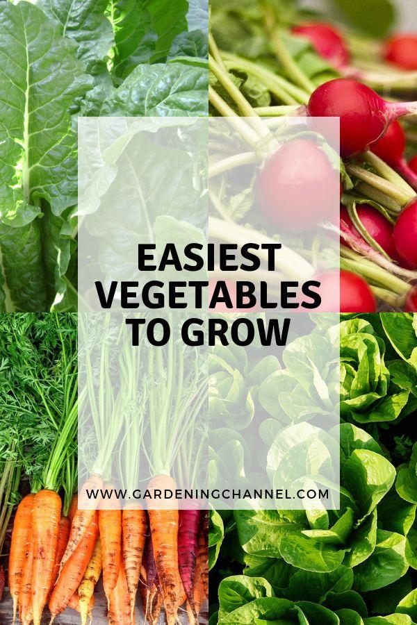 vegetable garden ideas for large yard #Vegetablegardenideas