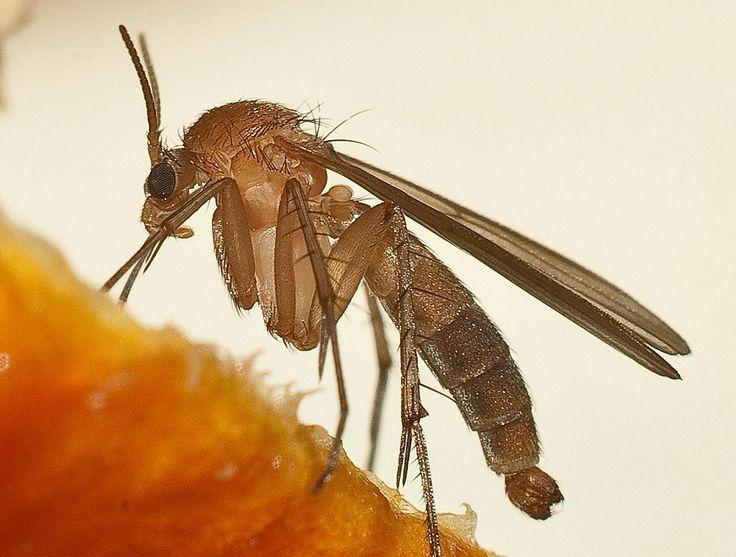 Как избавиться от комаров без ядовитой «химии»: 9 крутейших способов