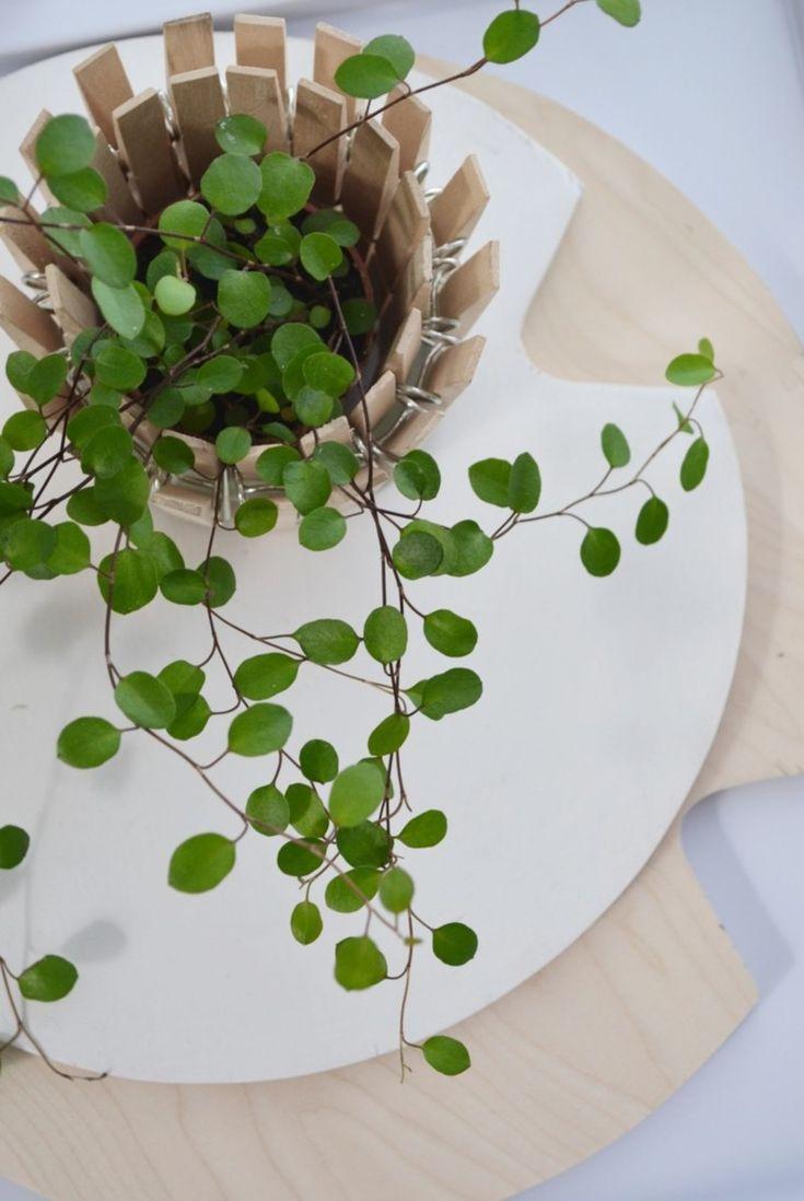 Clothespin planter - ruukku puupyykkipojista