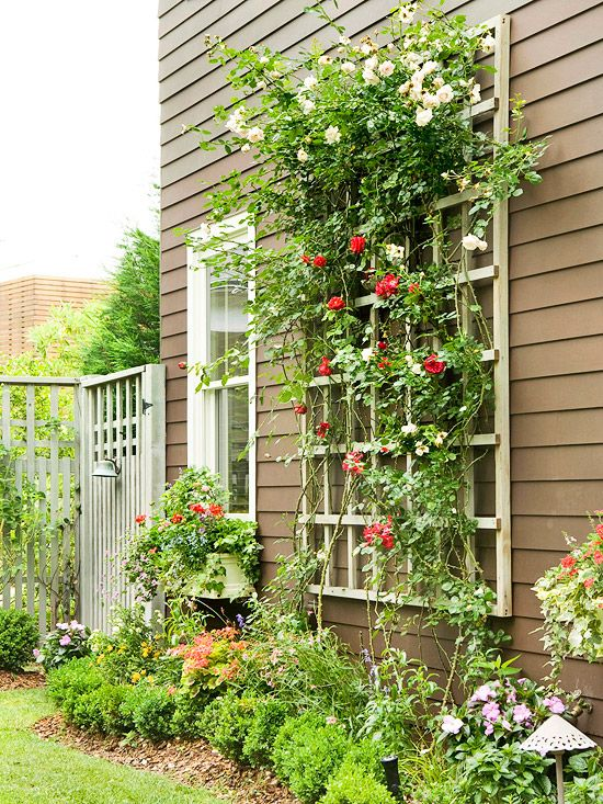 A simple structure offers ample space for climbing plants. A trellis can be freestanding or attached to another structure; if it's the latter, a trellis and plants can help to break up large expanses of exterior wall space. If a trellis is attached to a building, it should be propped far enough away from the structure to allow portions of plants to vine around the slats. The beauty of many climbing plants is that they can be grown either in the ground (as with this plant) or in containers…