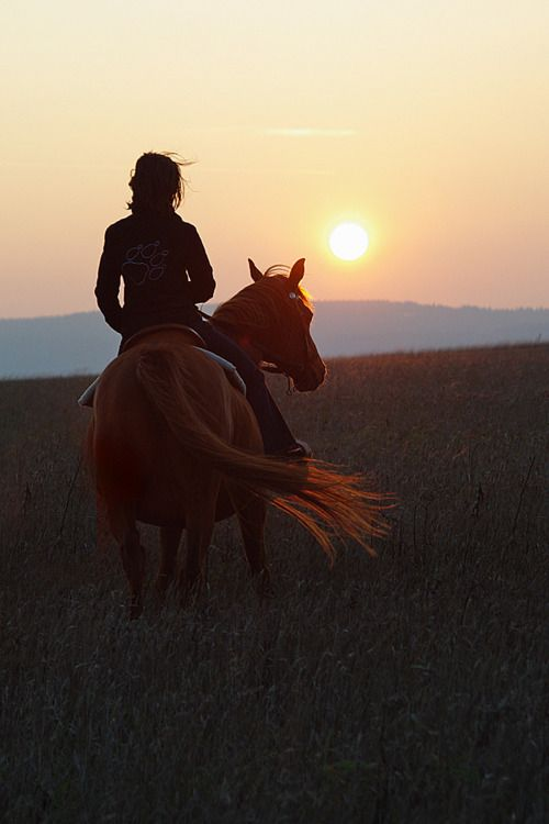 Horses bring a sense of peace and perfection...they are loyal and kind. They love you no matter what.