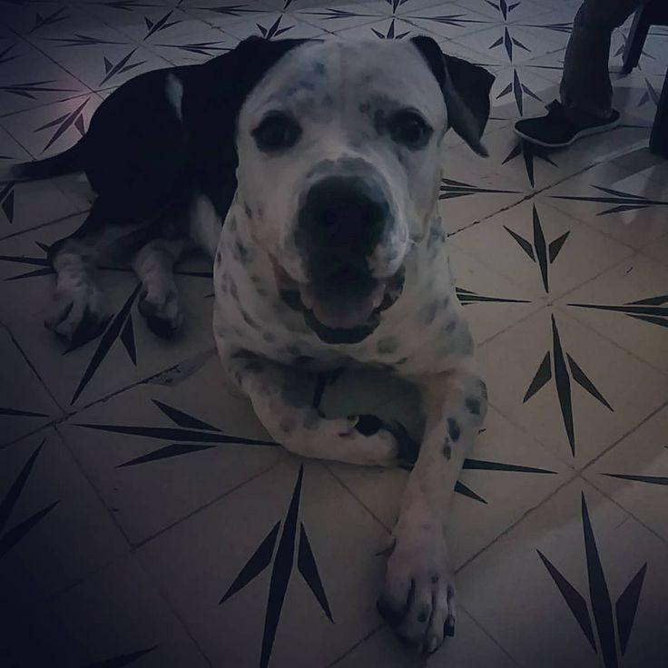 #dog #hund Holaaaaaaaaa Familia Estaba Un Poco Perdido Feliz Noche #Max #MaxPitb…