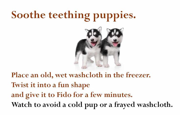 How to soothe a teething puppy... DIY