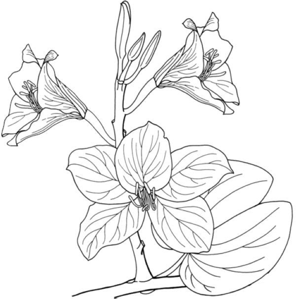 Beautiful Orchid Coloring Pages Free Coloring Sheets Beautiful Orchids Orchids Blue Lotus Flower