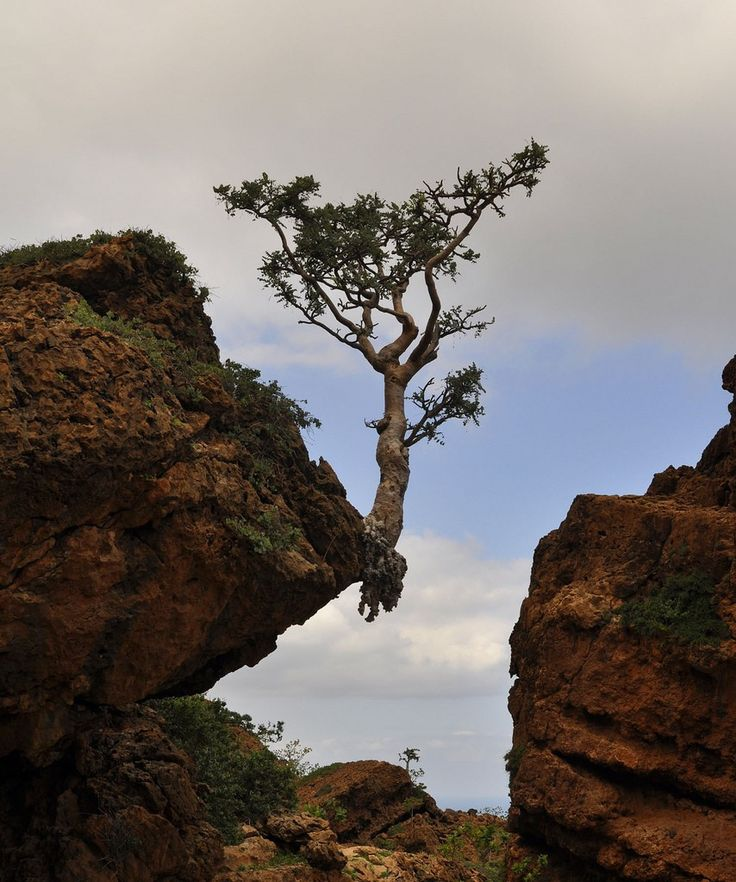 Defy the odds. Just hanging around! #tree #cliff