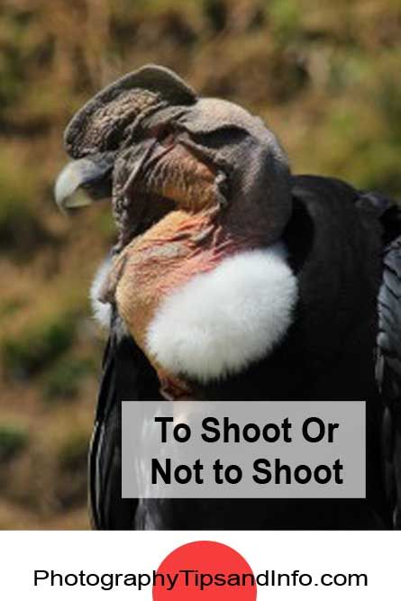 If you take the time to consider your subject matter and what you want to achieve from the shot, you will become a better photographer.. Check out the article here: http://www.photographytipsandinfo.com/to-shoot-or-not-to-shoot/
