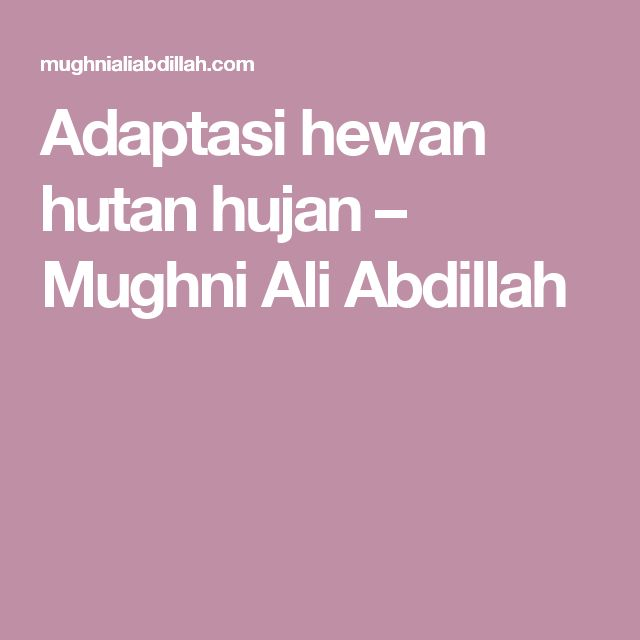 Adaptasi hewan hutan hujan – Mughni Ali Abdillah