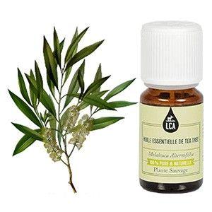 L'HUILE ESSENTIELLE DE TEA TREE : L'huile essentielle de tea tree traite les otites. Elle régule les problèmes circulatoires. En soins cutanés, le tea-tree peut s'appliquer sur les peaux acnéiques. L'huile essentielle de tea-tree peut être également utilisée en olfactothérapie. Lire plus concernant l'huile essentielle de tea-tree sur www.lca-aroma.com