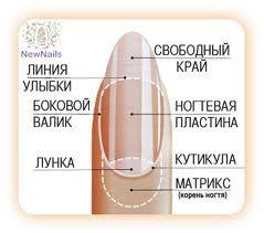 Диагностика по ногтям - База знаний - Клуб здоровья
