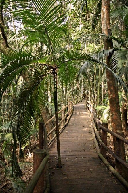São Paulo's botanical garden (Brazil). http://queeselsentidodelavida.com/ Lindo passeio, desta fantástica cidade.