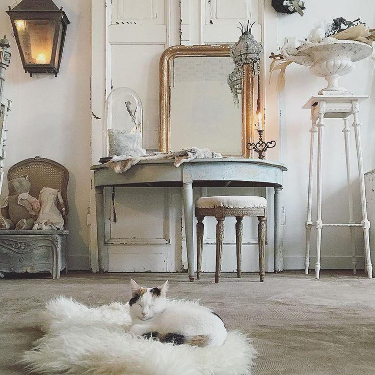 Le chat dans le showroom #cosy