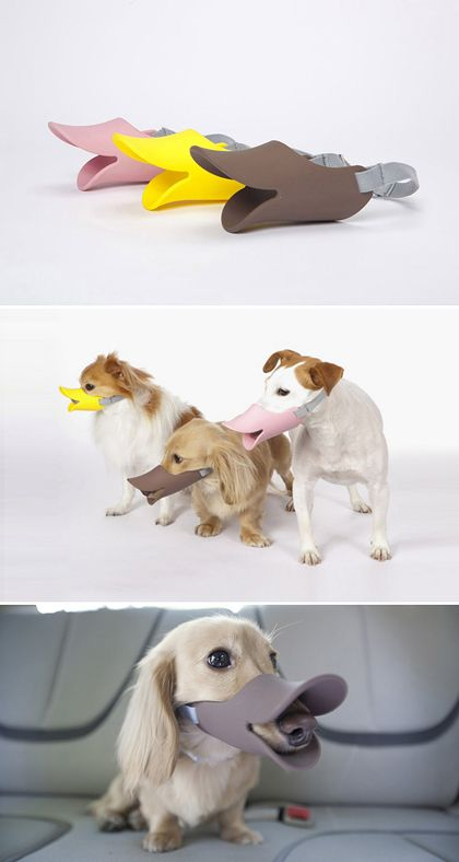 Quack Muzzle : Shut Up, You Duck Face! I hope my dog never needs a muzzle, but, dear god, if he does, this is the only one I'll ever use.