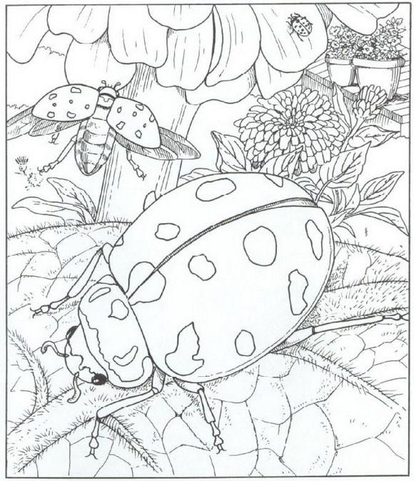 kleurplaat Natuur rondom het huis - lieveheersbeestjes