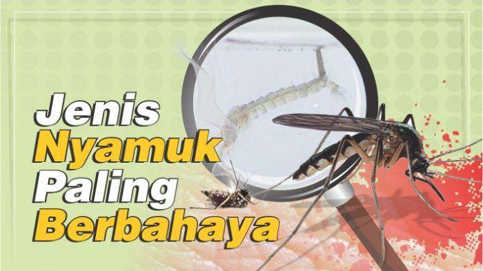 18++ Nyamuk dapat menyebabkan penyakit trends